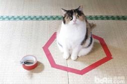 来个经典的小游戏,圈小猫